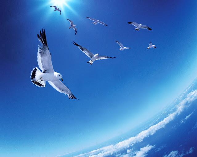 Merindu Langit Biru